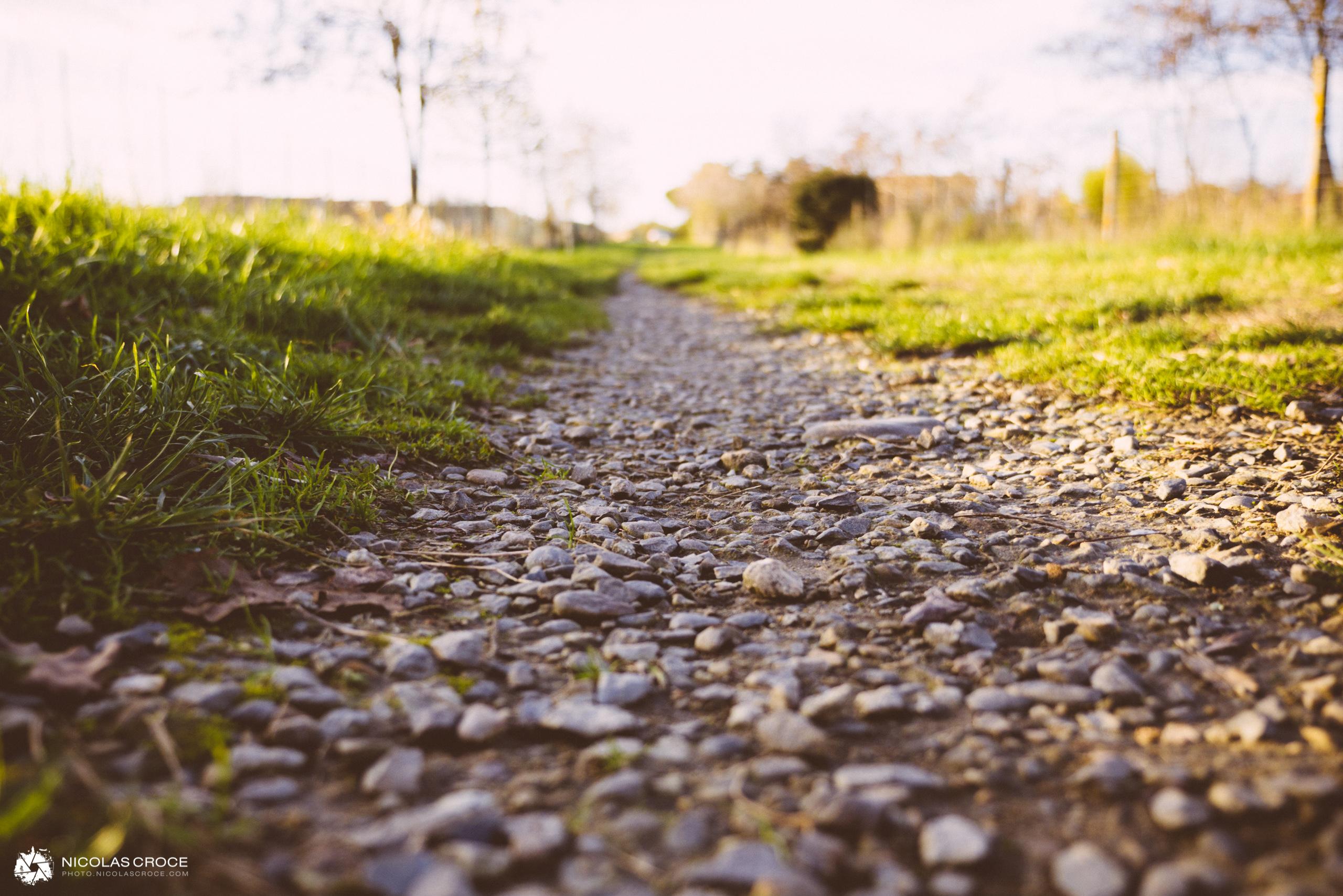 Un petit chemin, au milieu de l'herbe verte, pour se ballader au coucher du soleil