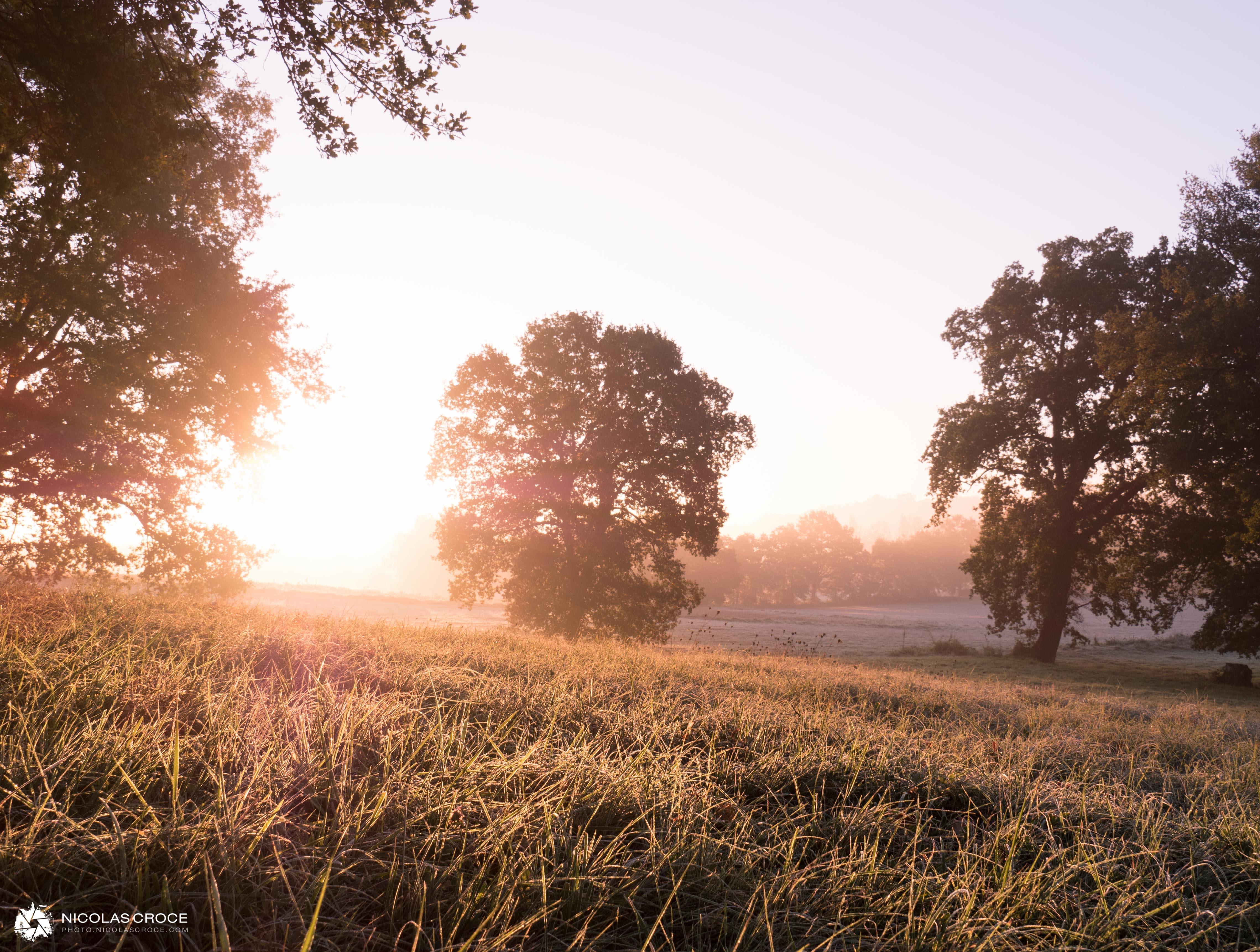 Ce matin, sur la route pour me rendre au bureau, je n'ai pas pu m'empêcher de m'arrêter pour prendre cette photo. Le soleil était en train de se lever sur les champs qui entourent notre nouvelle maison, et la première gelée de l'année créait de magnifiques reflets dans l'herbe verte.